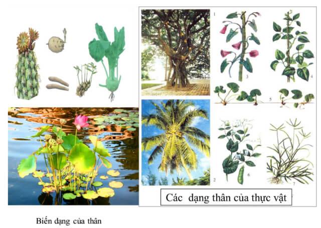 vì sao thực vật hạt kín lại có thể phát triển đa dạng phong phú như ngày nay